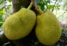 Top 8 Benefits of the Amazing Fruit: Jackfruit